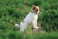 Вакцинация собак и кошек (вакцина)