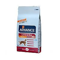 Advance Dog Lamb & Rice  12кг - корм для взрослых собак с ягненком