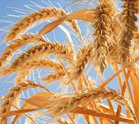 Базовые масла:Масло зародышей пшеницы 50 гр.