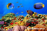 """Фотообои: """"Чудесные рыбки"""""""