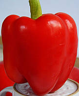 Перець солодкий сорт Світозар, 0,5 г