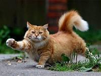 Кастрация котов/стерилизация кошек: «за» и «против»