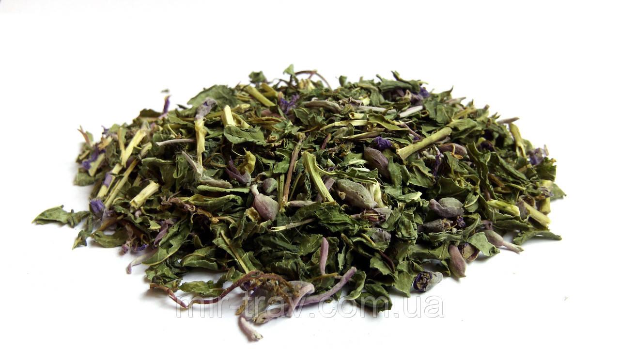 Иван чай трава