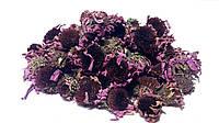 Эхинацея пурпурная цветки 100 грамм
