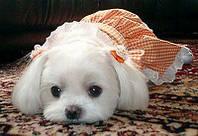 Частная ветеринарная клиника или государственная ветлечебница: куда лучше обратиться, если у Вас заболела собака.