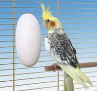 Минеральный камень для птиц