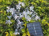 Светодиодная гирлянда на солнечной батарее  Лютики фиолетовый 7м, фото 3