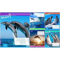 Тетрадь в линию 36 листов А5, 1 Вересня Дельфины 679568