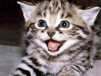 Предлагаем широкий ассортимент средств для лечения кошек и других животных
