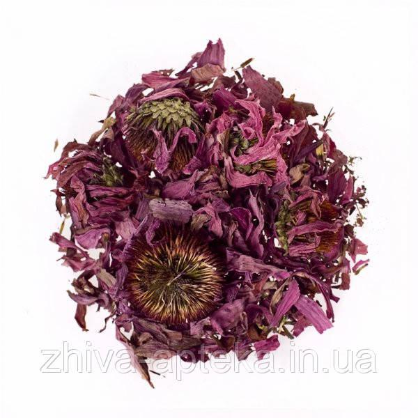 Эхинацея пурпурная (цвет) 1кг оптом