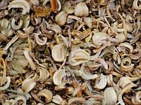 Календула (семена) 1кг оптом