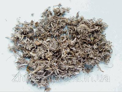 Полынь горькая (трава) 1кг оптом
