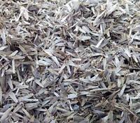 Череда (семена) 1кг оптом