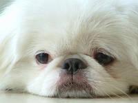 У Вас болеет собака и Вы ищете ближайшую от дома ветеринарную клинику?