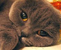 У Вас болеет кошка и  Вам нужна ближайшая от дома ветлечебница?