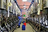 Молочный цех переработке молока