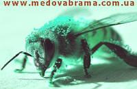 Продам лекарства для пчел