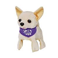 Чи Чи Лав Интерактивная собачка Чихуахуа Флиппи 22 см