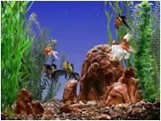 Эскурсия на Монастырский остров с посещением аквариума., фото 1