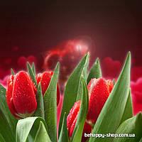"""Фотообои: """"Романтичные красные тюльпаны"""""""