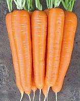 Морква сорт Нантська харківська