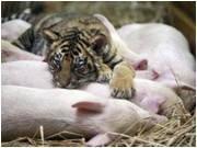 Экскурсия в Новомосковск с посещением зоопарка в с. Хащевом.