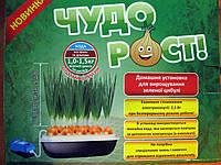 Домашняя установка для выращивания зеленого лука ЧУДОРОСТ
