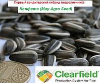 Семена кондитерского подсолнечника Конфета гибрид устойчивый к Евро-Лайтнинг