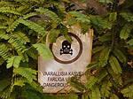 Ядовитые комнатные растения (интересные статьи)