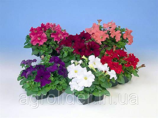 Лучшие декоративные растения для сада: роскошная петуния