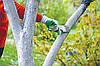 Побелка деревьев: когда, как и надо ли?