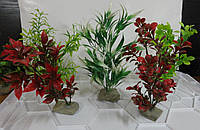 Декоративное растение для аквариума Польша 20-25 см
