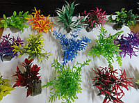 Декоративное растение для аквариума Польша 10-12 см