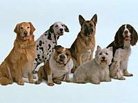 Hills Pet Nutrition-корм для взрослых собак