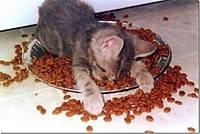 Корми для кішок