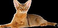 Royal Canin для отдельных пород кошек.