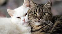 Royal Canin для дорослих котів і кішок.