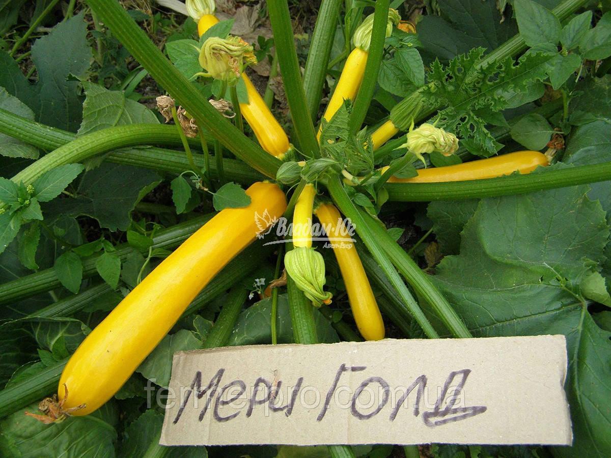 Семена кабачка Мериголд F1 \ Merigold F1 500 семян Clause