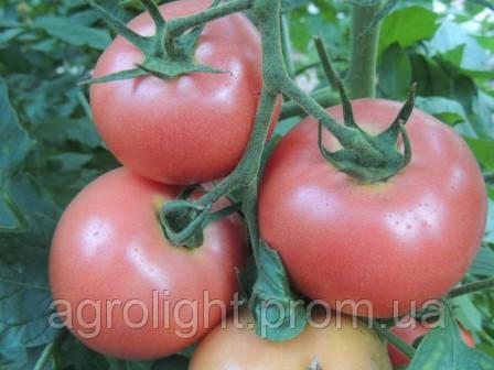 Купить Семена томата раннего Пинк Энжел (Pink Angel)