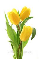 Заказать цветы 8 марта