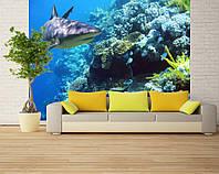 """Фотообои """"Акула и кораллы"""", текстура песок, штукатурка"""