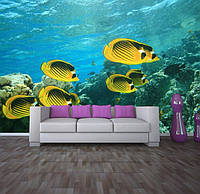 """Фотообои """"Желтые рыбки"""", текстура песок, штукатурка"""