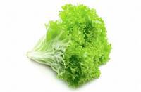 Салат зеленый , лоло бьонда