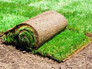 Рулонный газон с укладкой в Одессе, Черкассах, Яремче