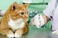 Кастрация котов, стерилизация кошки