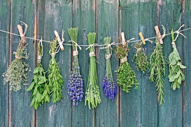 Семена лекарственных и пряных культур