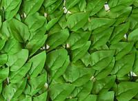 Декоративное зеленое покрытие «Листья»