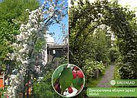 Арка из декоративной яблони, 2,4-2,6 метра