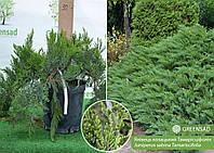Можжевельник казацкий Тамарисцифолия (Tamariscifolia), 15-25 см