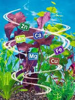 Ознаки дефіциту елементів живлення у рослин